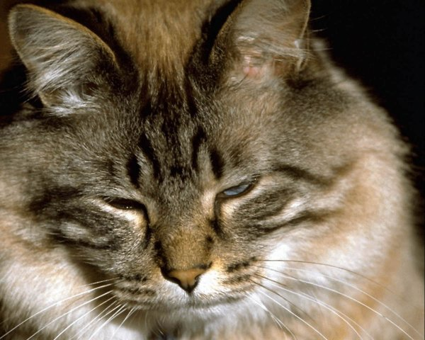cats after anesthesia